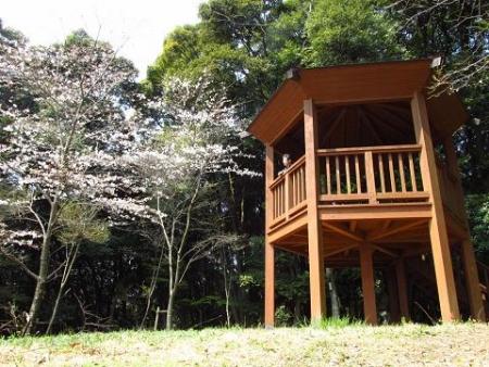 円応寺の桜 101