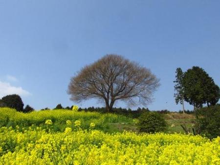 円応寺の桜 160