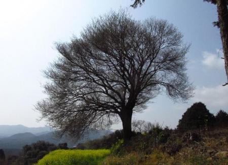 円応寺の桜 157