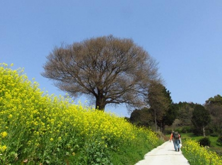 円応寺の桜 156