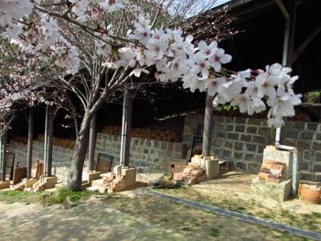 円応寺の桜 172