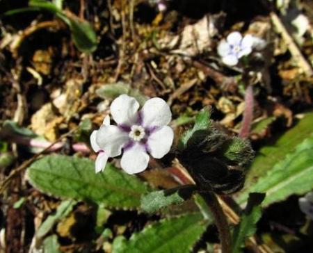 花猫の目草カラ迫岳 147