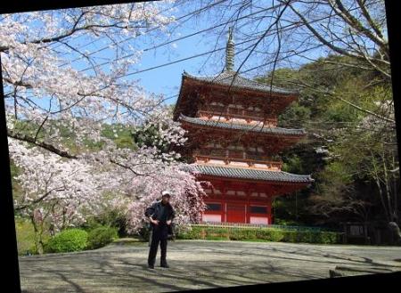 清水の桜 088