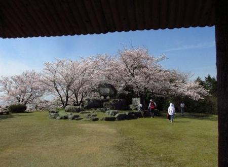 清水の桜 120