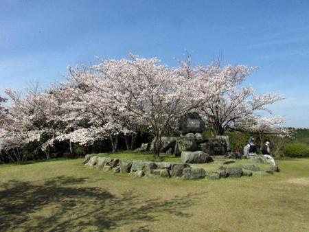 清水の桜 139