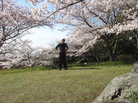 清水の桜 130