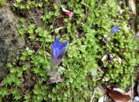 花散る清水山 099