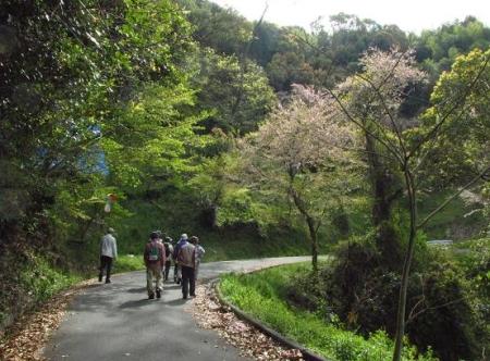 花散る清水山 018