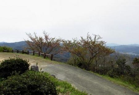 花散る清水山 030