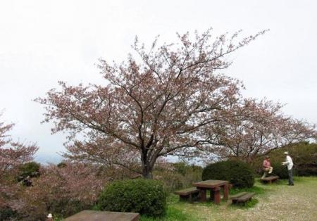 花散る清水山 044
