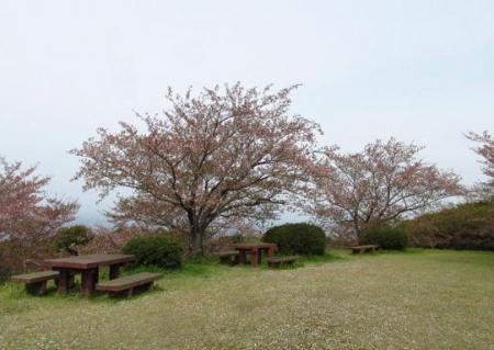 花散る清水山 031