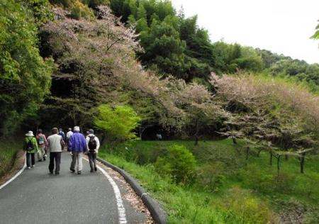 花散る清水山 058