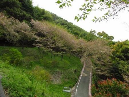 花散る清水山 057
