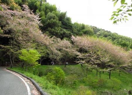 花散る清水山 060