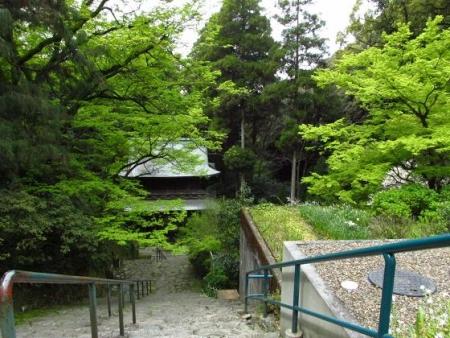 花散る清水山 076