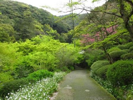 花散る清水山 074
