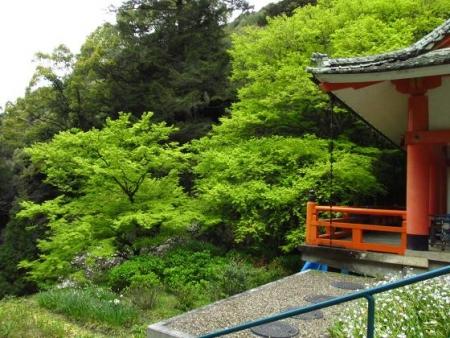 花散る清水山 075