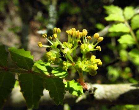 フデリンドウの花 075