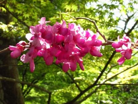 フデリンドウの花 157