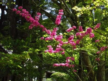 フデリンドウの花 158