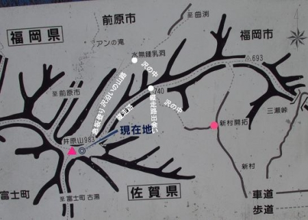 井原山の花ニリンソウ 276