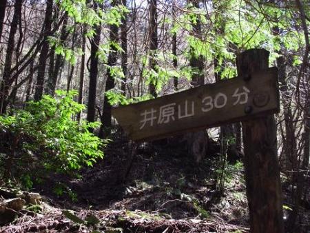 井原山の花ニリンソウ 253