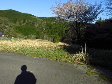 井原山の花ニリンソウ 333