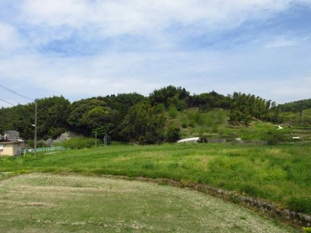 立花町のトンボと川魚 092