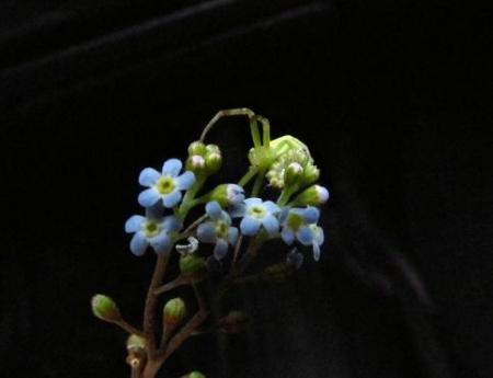 星野カラ迫岳の花と桜 038