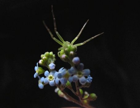 星野カラ迫岳の花と桜 029