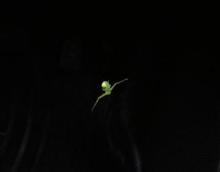 星野カラ迫岳の花と桜 031