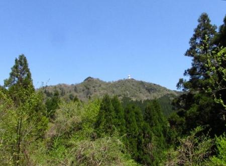 釈迦岳とワチガイソウ 056