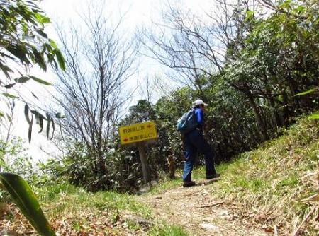 釈迦岳とワチガイソウ 095