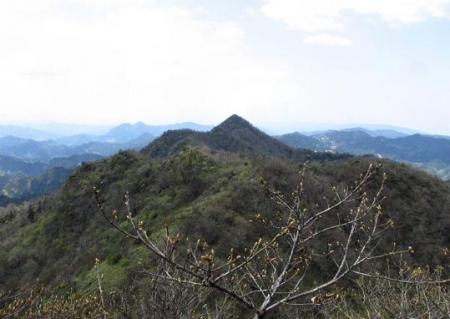 釈迦岳とワチガイソウ 124