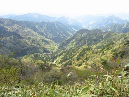 釈迦岳とワチガイソウ 168