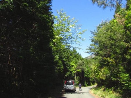 ツツジ井原山の 013