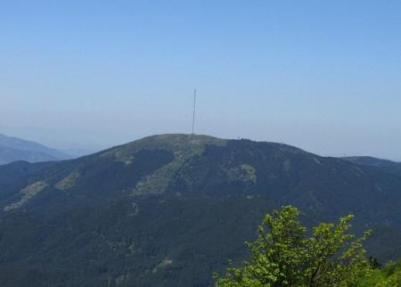 ツツジ井原山の 054
