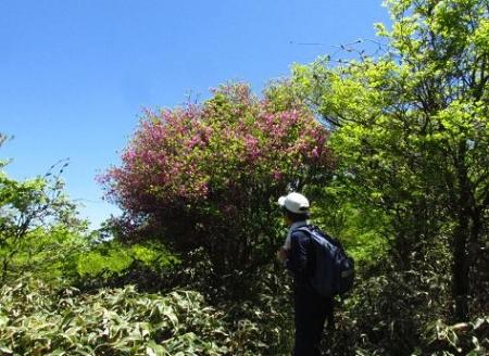 ツツジ井原山の 093