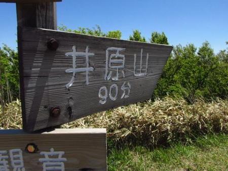 ツツジ井原山の 060