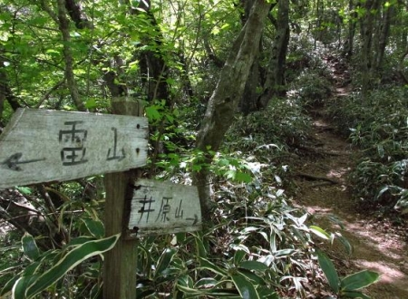 ツツジ井原山の 113
