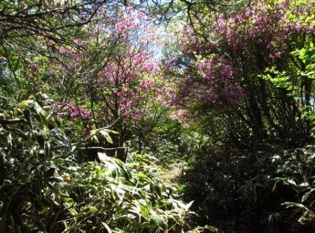 ツツジ井原山の 117