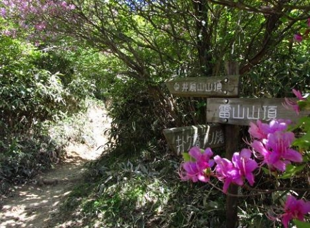 ツツジ井原山の 190