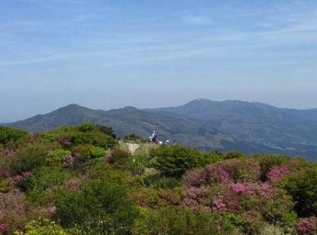 ツツジ井原山の 209