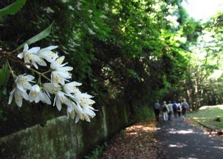 清水の卯の花 047