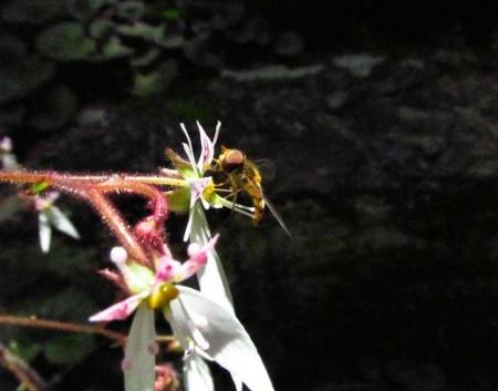 清水の卯の花 076