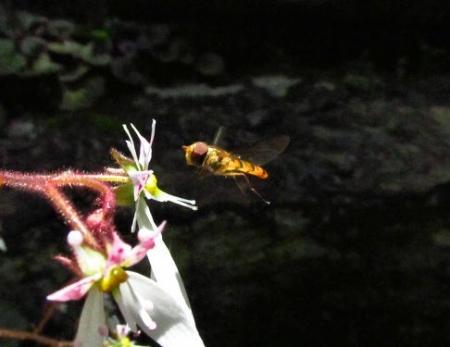 清水の卯の花 075