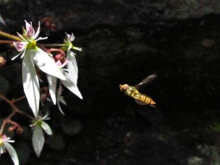 清水の卯の花 070