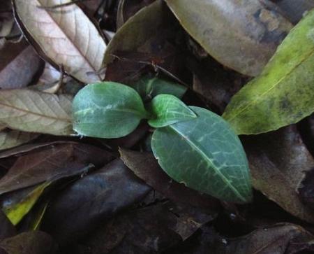 清水の卯の花 022