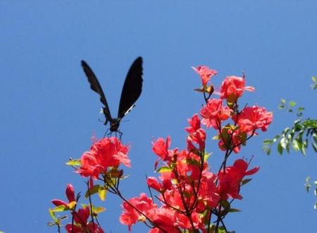 清水の卯の花 030