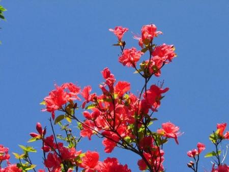 清水の卯の花 032